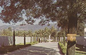 Road and vineyard