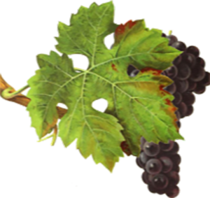IWRDB grape image